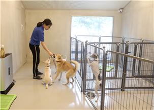 서초구, 서초동물사랑센터 각종 지원 통해 입양장려 나선다!